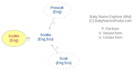 Baby Name Explorer for Scottie