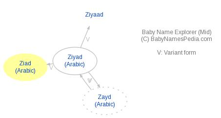 Baby Name Explorer for Ziad