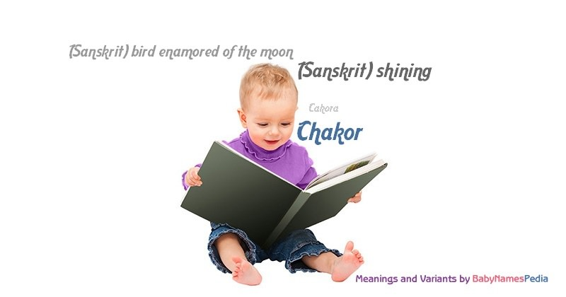 Meaning of the name Chakor
