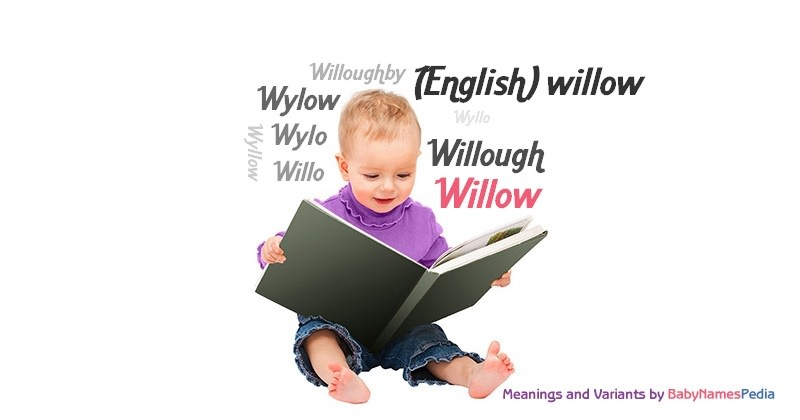 Meaning of the name Willow