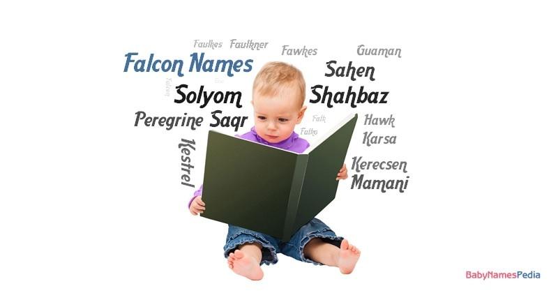 Falcon Names for Boys at Baby Names Pedia